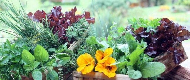 verduras sao ricas em calcio